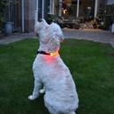 LED verlichting voor om hondenhalsband
